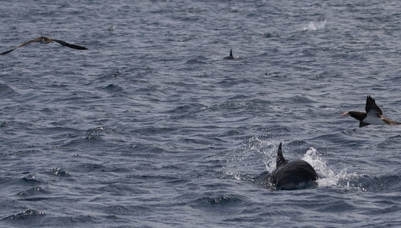 Seabirds & dolphins (c) Louise Johnson